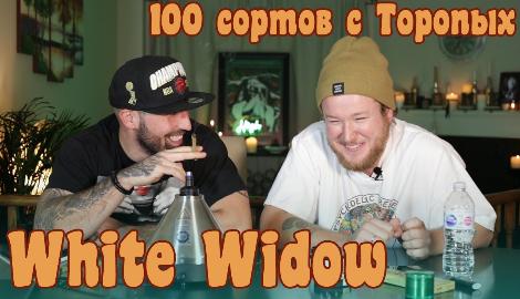 Видео: 100 сортов с ToroПЫХ (White Widow)