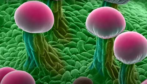 Видео: Каннабис под  микроскопом