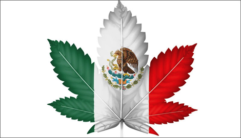 Каннабис в Мексике: от древних обычаев к современному регулированию