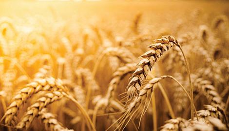 Россия не уступает конкурентам на мировом рынке удобрений