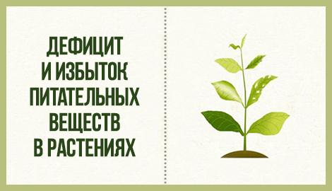 О дефицитах и избытках питательных веществ в растении