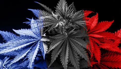 Франция легализовала медицинский каннабис