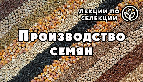 "Лекции по селекции: ""Производство семян"""