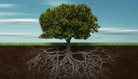 Транспортная система растений: корень