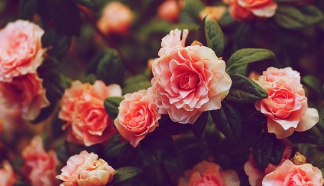 Шестой Международный фестиваль садов и цветов открывается в Москве