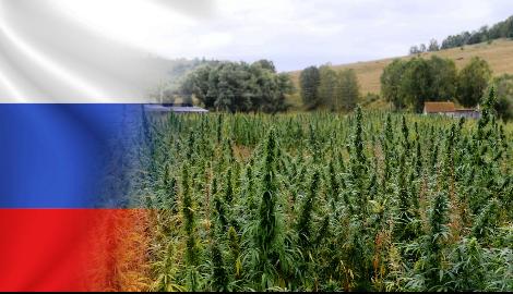 Готова ли Россия к легалайзу?