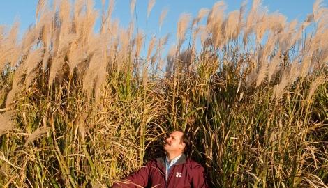 Ученые проверили как нижние листья влияют на урожайность