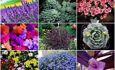 Пятничная красота, или поговорим о цветочках