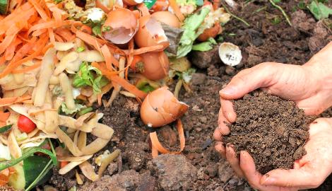 Выращивание каннабиса на домашнем компосте