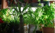 Есть ли у растений сознание и чувства?