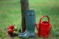 В Ярославле открылась выставка-ярмарка для садоводов и огородников