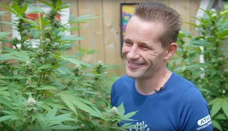 Видео: Медицинская марихуана в Амстердаме (Drugslab)