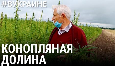Видео: Конопляная долина в Украине