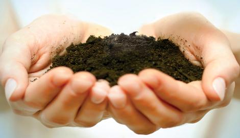 Бурый уголь как новый субстрат