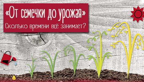 От семечки до урожая. Сколько времени всё занимает?