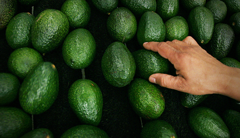 Зеленое золото: авокадо дороже каннабиса