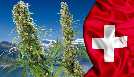 Швейцария будет экспериментировать с легалайзом