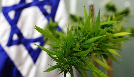 Зачем Израиль закупает тонны каннабиса?
