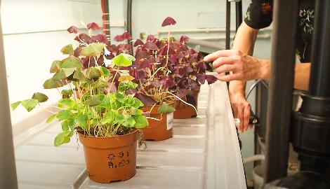 Видео: Как запустить свою ферму с микрозеленью