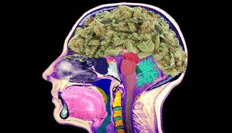 Каннабис способствует восстановлению клеток мозга