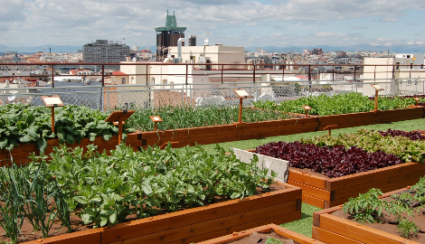 Овощи, выращенные в городских условиях Испании - экологически чисты