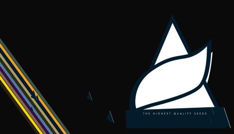 """Pyramid Seeds: """"Можно получить все, сразу и быстро! Главное, правильный подход!"""""""