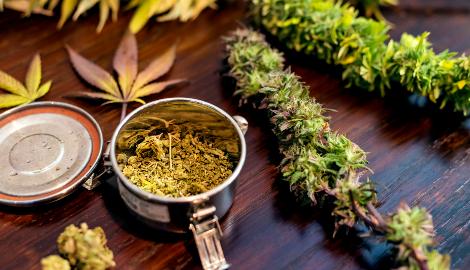 Ученые из разных стран рассказали о том, почему так важна медицинская марихуана