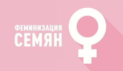 Феминизация семян
