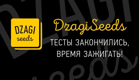 Открытие Dzagi Seeds, теперь официально!