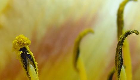 Пыльца оказалась хорошим удобрением