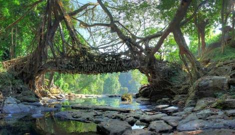 Корневые мосты в Индии