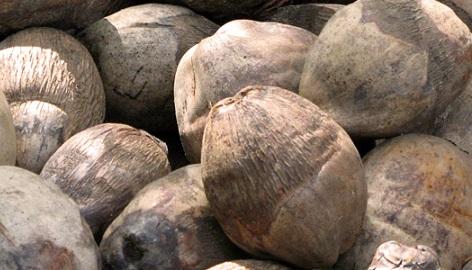 CANNA разрушает мифы о выращивании на кокосе. Часть 1