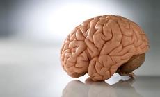 Топ 10 пищи для мозга