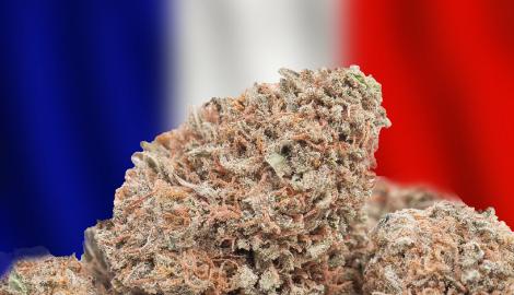 Франция будет распространять каннабис в лечебных целях