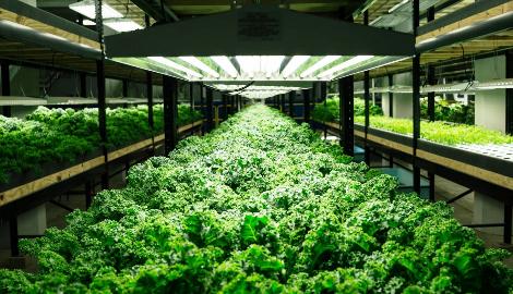 В Америке закрывается крупнейшая аквапоническая ферма