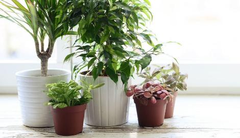 Пересадка комнатных растений: что и как
