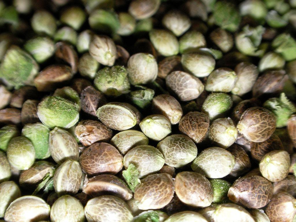Шорт-лист полезных семян
