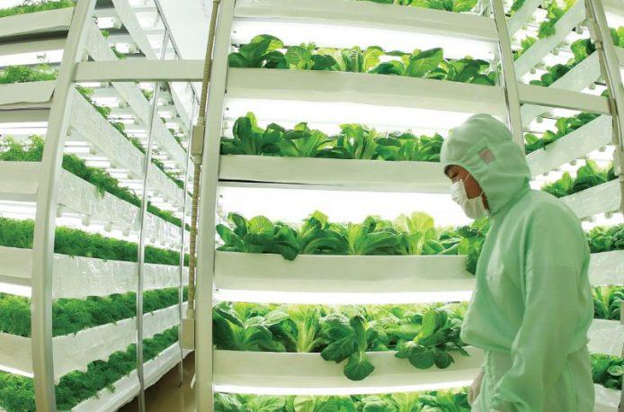 В будущем фермы могут стать подземными
