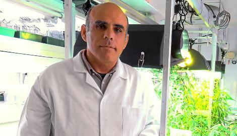 Испанский ученый вырастил каннабис без ТГК