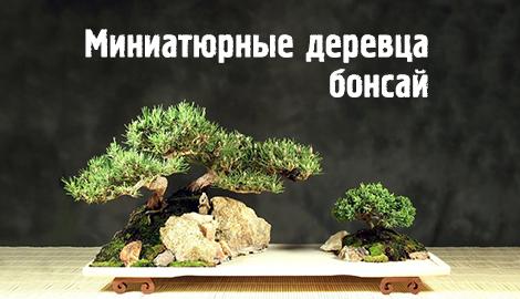 Миниатюрные деревца бонсай