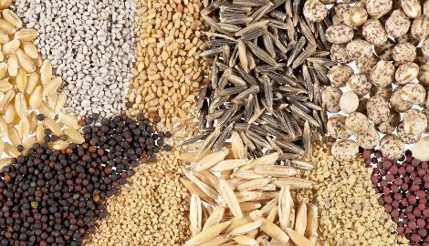 Колумбия может стать мировым банком семян