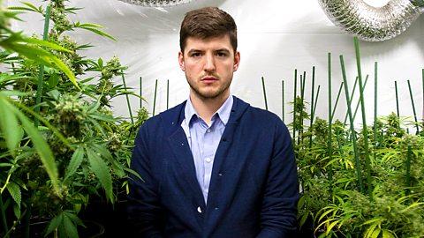 Фильм BBC: В чём вред марихуаны?