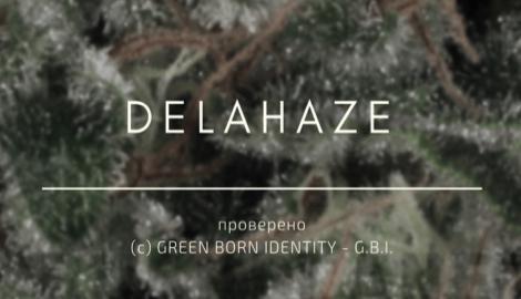 Delahaze: Проверено G.B.I.