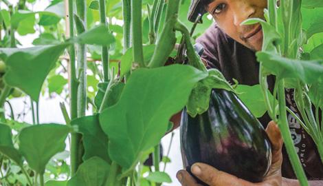 Большой урожай на органике реальность?