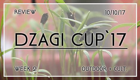 Новости DzagiCup2017: Аутдор и Культура. Неделя 2