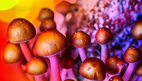 Канадцам разрешили лечить депрессию волшебными грибами