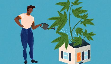 Видео: Как выращивают каннабис