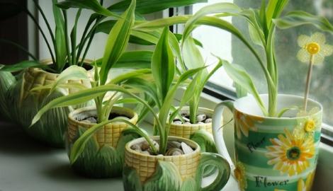 Комнатные растения помогают бороться со стрессом