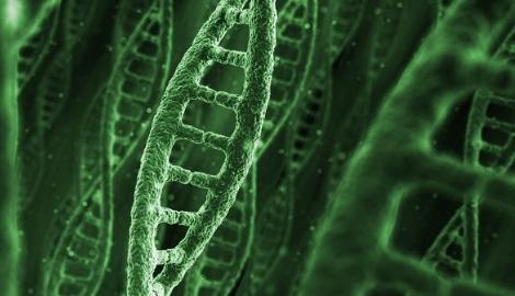 Ученые разобрали каннабис на гены