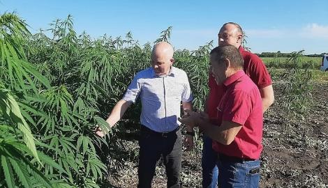 Мука из конопли в Курской области